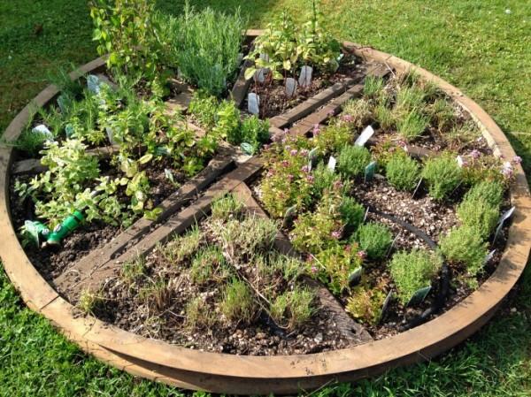 Herb wheel in our walled garden